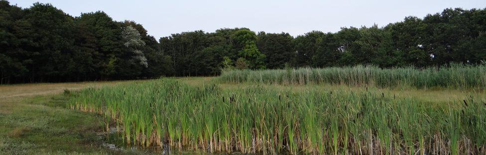 Duinbeek Langeveld